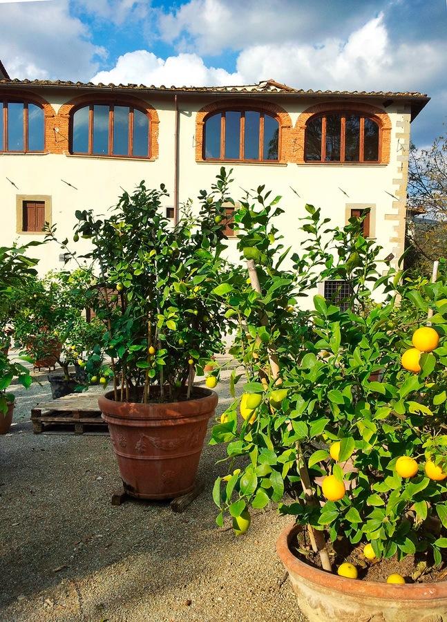 Villa Toscana per Matrimoni ed Eventi in Esclusiva – Poggitazzi