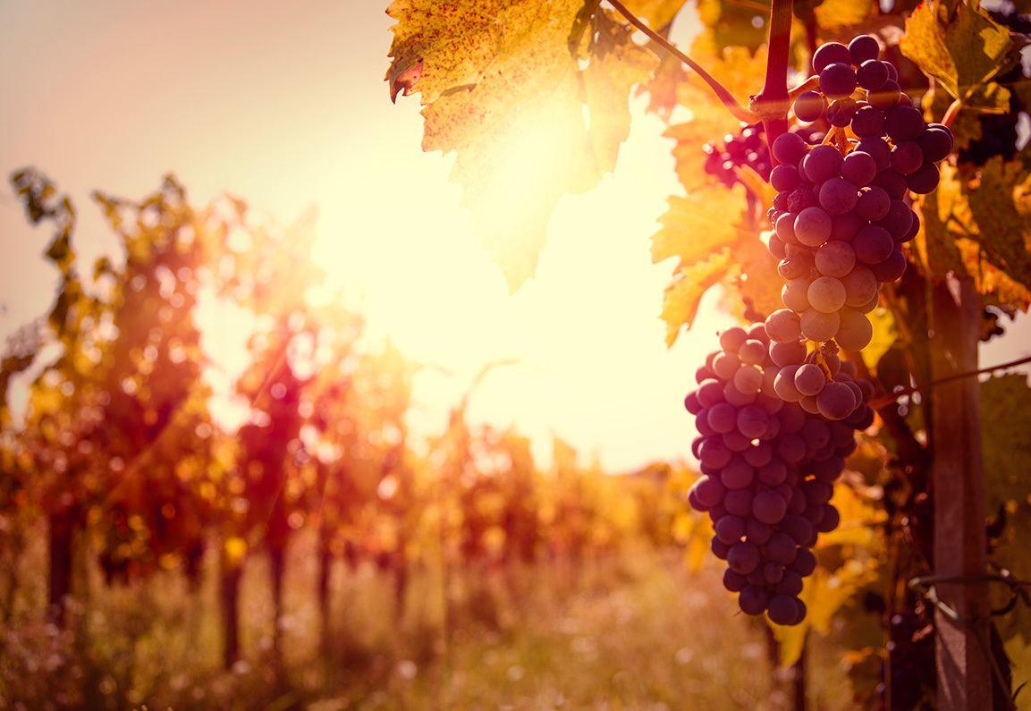Vino Chianti Toscana Terranuova Bracciolini – Poggitazzi