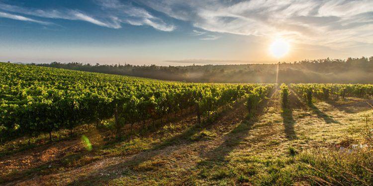 Vacanze in Agriturismo in Toscana vicino Arezzo - Poggitazzi